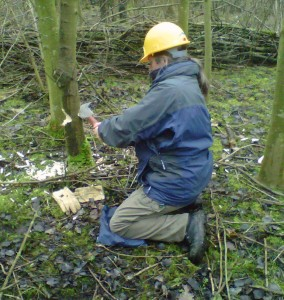 Thinning using a Yorkshire billhook