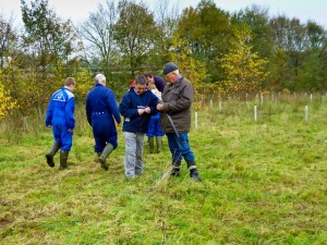 Seeding the Yellow Rattle