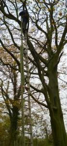 Tree Climbing fun!!
